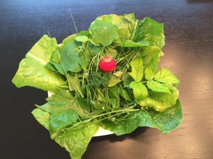 On se fait des salades très variées surtout au printemps
