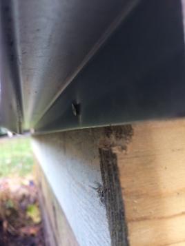 Voici à quoi ressemble la barrière à limaces. Difficile de la contourner pour elles.