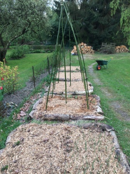 """Grâce au broyage des branches élaguées de mon jardin j'ai pu refaire le """"mulch"""" des carrés de culture et de mes buttes."""
