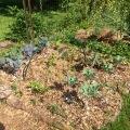 Carre choux rouges – brocolli – bettraves – fenouils