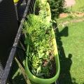 Terrasse – melange de fleurs
