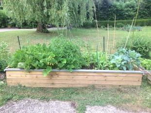 Culture en bac à légumes