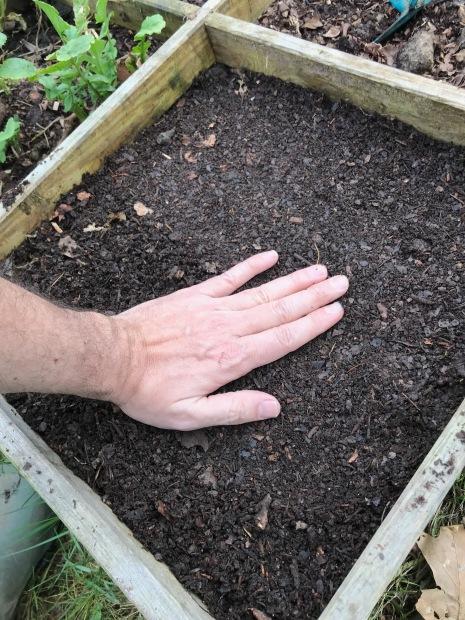12 semis petits pois