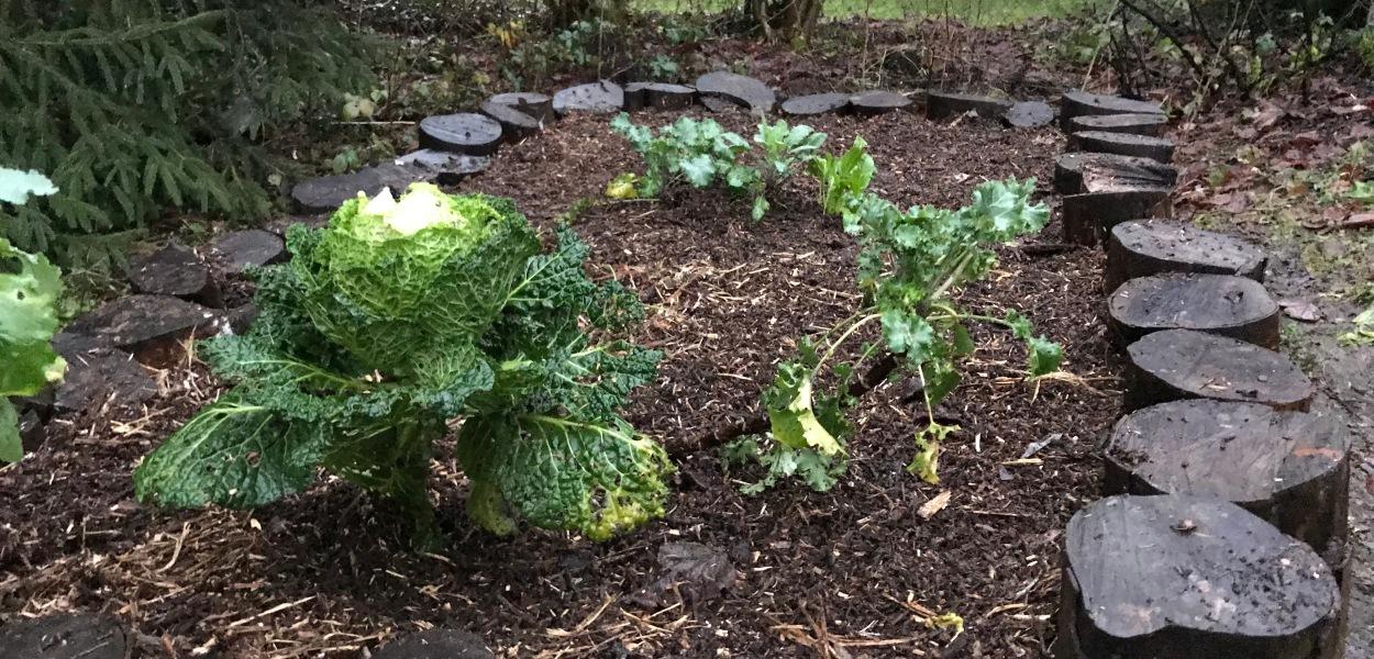 semer repiquer planter comment faire de la permaculture en belgique