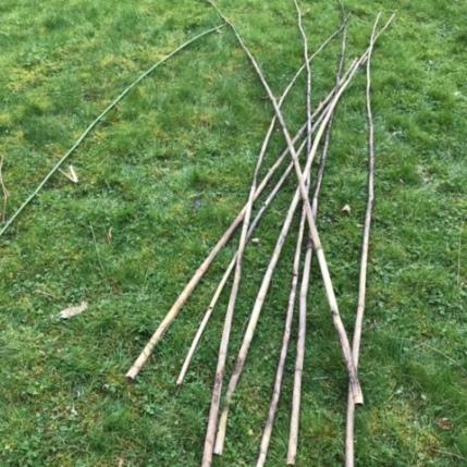 Récupération des bambous de mes tipis à haricots
